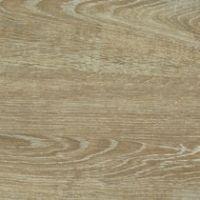 Mondego Oak