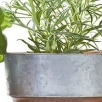 Wall Herbs