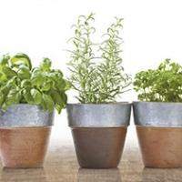 Cerasum Herbs