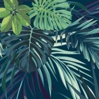 Palm Vert